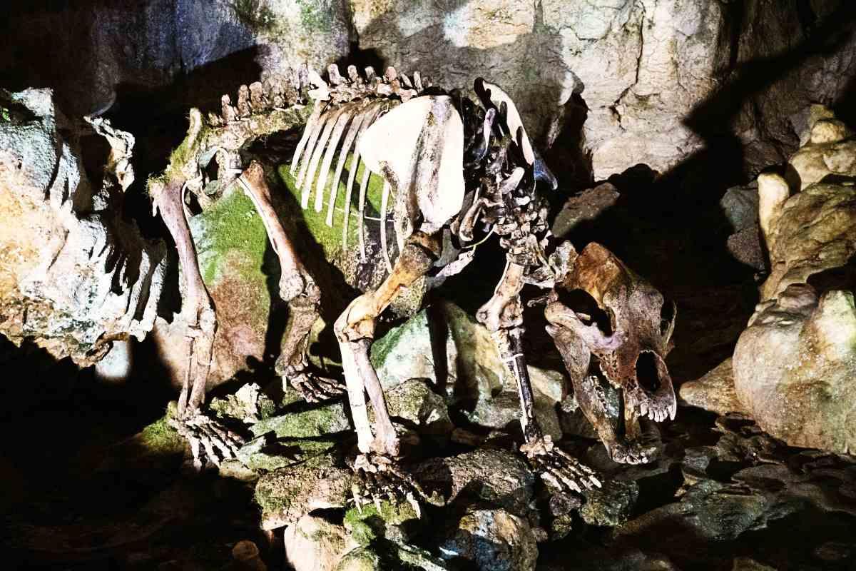 Bärenskelett in Bärenhöhle