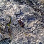 Anker für Kletterer
