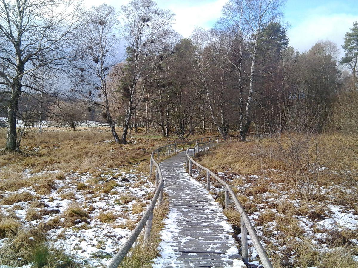 Holzdielenweg durch das Schopflocher Moor